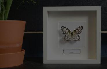 Verwonderlijk Insecten Design   Ingekaderde insecten, vlinders en schorpioenen QZ-43