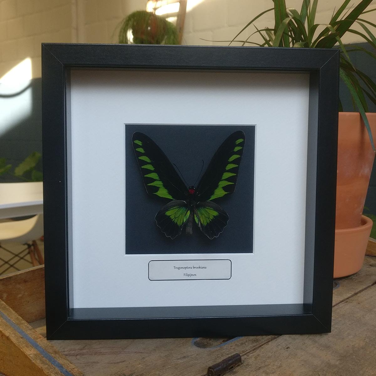 2. Ingekaderde vlinders