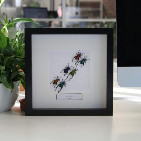 4. Compositie met insecten