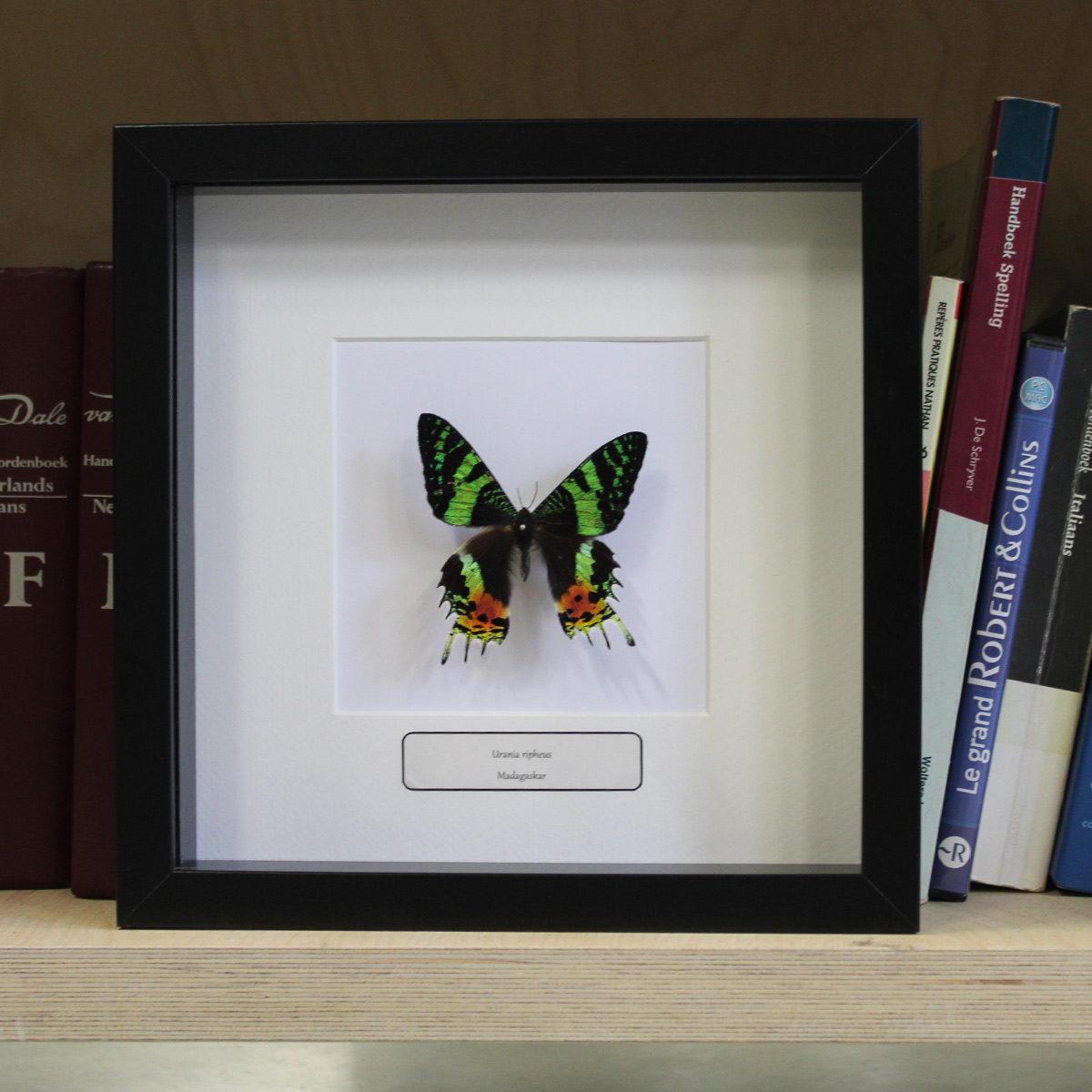 Verbazingwekkend Insecten Design   Ingekaderde insecten, vlinders en schorpioenen RC-49