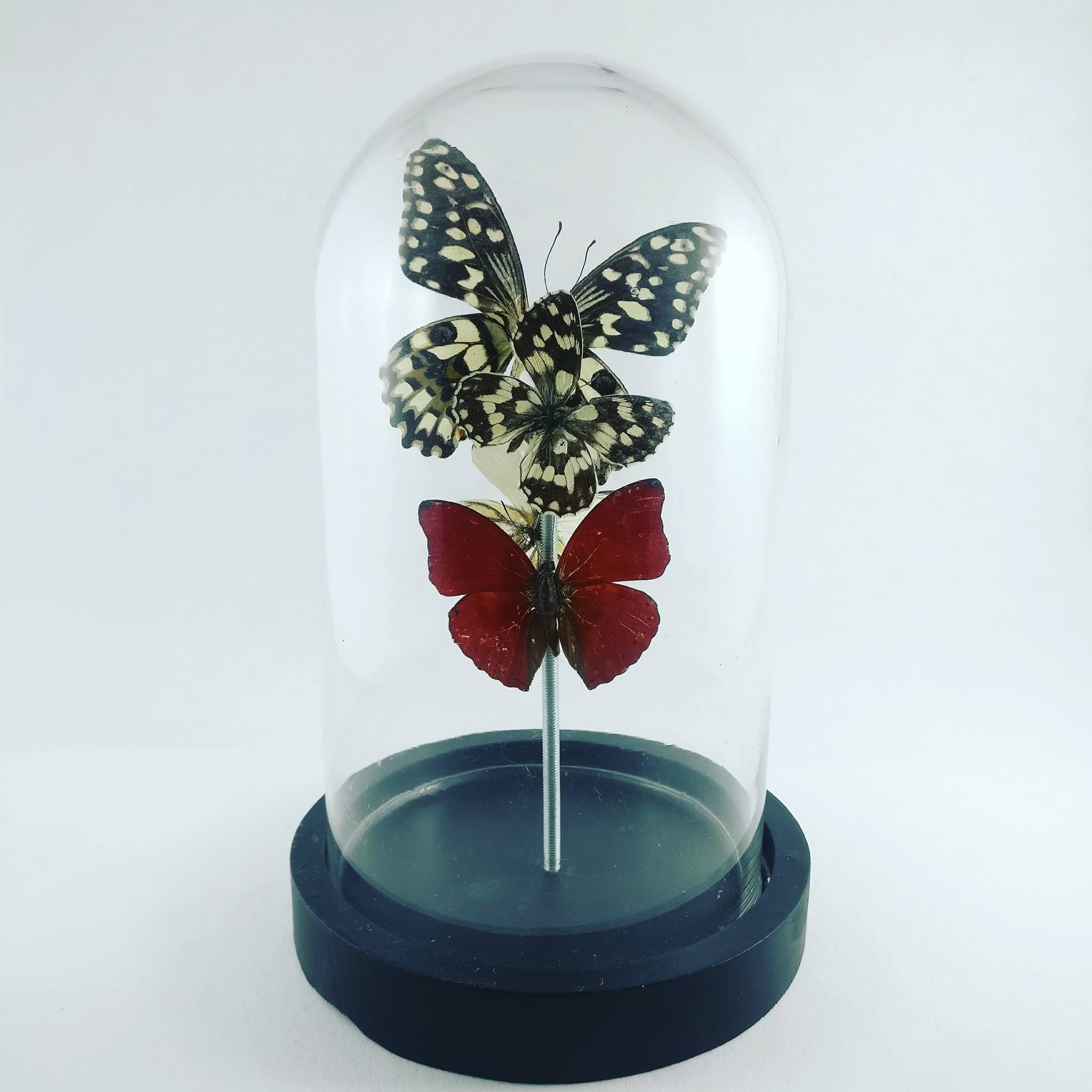 Stolp kleine vlinders