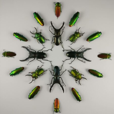 Beetle symmetrie