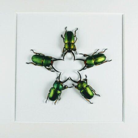 Floral of beetles
